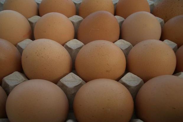Handlowcy reagują na zainteresowanie klientów jajkami ekologicznymi