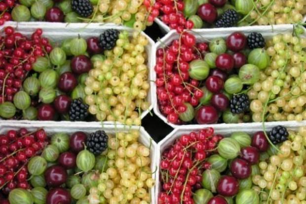 Rynek Hurtowy w Broniszach: Owoców mniej niż w 2008 r. i tańsze
