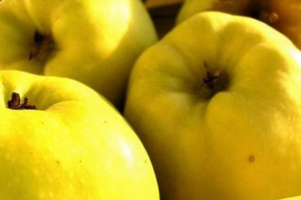 Ekspozycja owoców powinna być podkreślana jedynie białym światłem