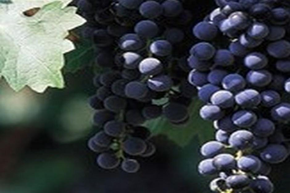 Sieć sklepów z winami wejdzie na NewConnect