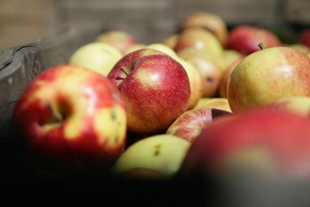 Spada spożycie jabłek, wynosi średnio 16 kg rocznie na osobę