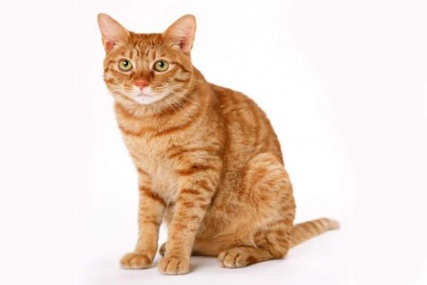 Kot sprawcą włamania do delikatesów, straty sięgają 3,6 tys. zł