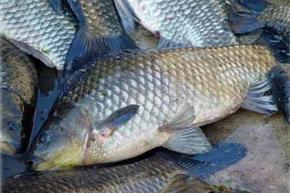 Na Podkarpaciu startują kontrole sprzedawców ryb i choinek