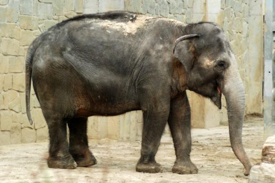 """Pedro Martinho: Hipermarkety to ,,stary słoń"""""""