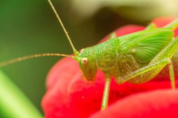 W szwajcarskich supermarketach będzie można kupić jadalne insekty