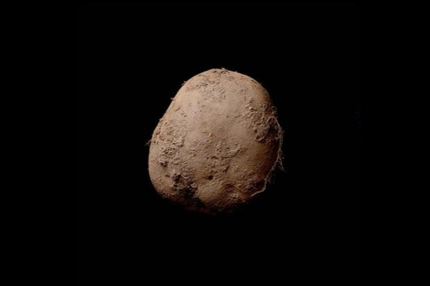 Biznesmen z Europy kupił zdjęcie ziemniaka za 1 mln euro