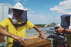 Pszczele hotele na dachach sklepów Carrefour (video)