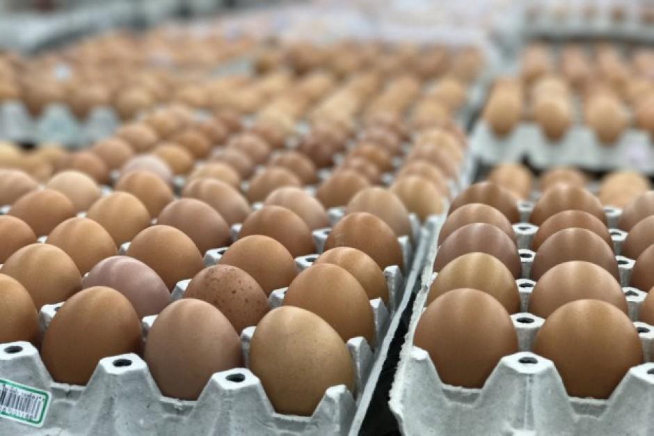 Fipronil w jajach pochodzących z trzech polskich ferm