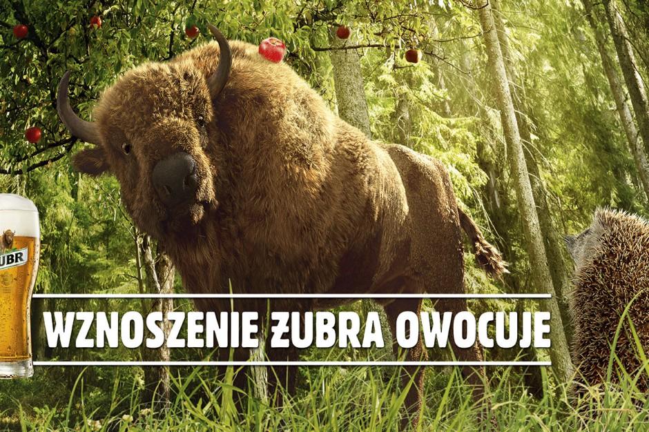 Wznoszenie Żubra owocuje – jesienna odsłona marki z nowym spotem