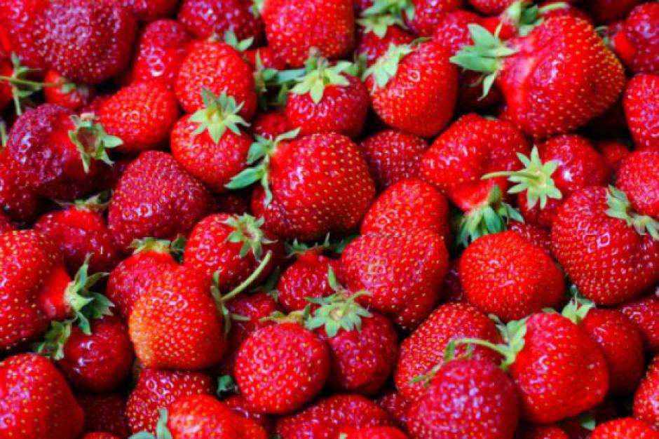 Świeże truskawki do końca października
