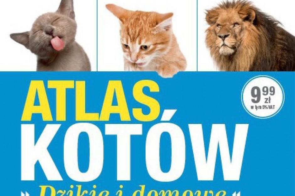 Atlas Kotów hitem sprzedaży!
