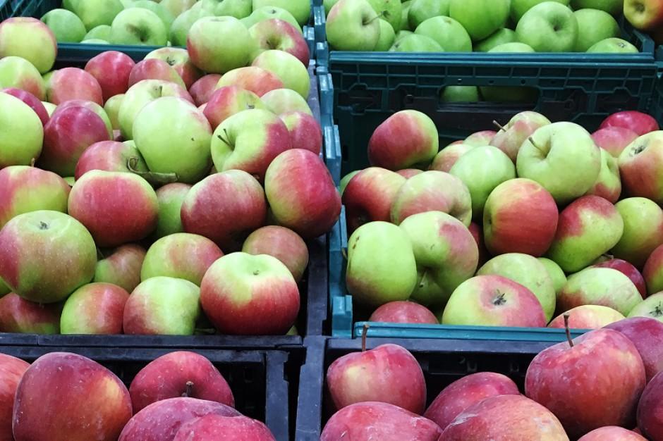 Bronisze: Jabłka w cenie mandarynek