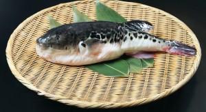 Śmiertelnie trująca ryba trafiła do japońskich supermarketów