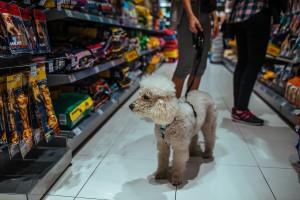 Maxi Zoo otwiera nowy sklep. Będzie go można odwiedzić wraz ze zwierzakiem