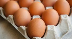GIS ostrzega: Do sprzedaży trafiły skażone jaja