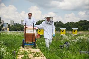 Pszczoły zadomowiły się w Tarasach Zamkowych