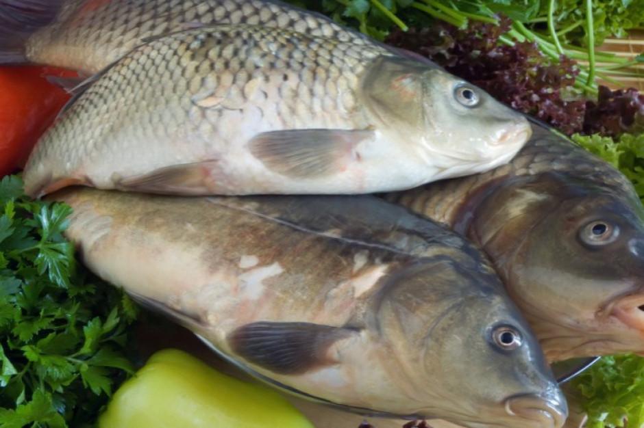 Od opinii naukowców zależy, czy zmienią się wytyczne dot. przenoszenia żywych ryb