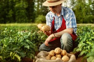 Dawid pokonał Goliata - PE za ochroną rolników przed marketami