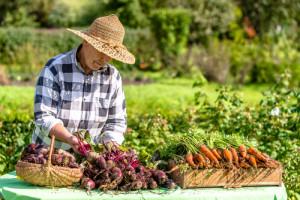 Segmentacja konsumentów: Ekoentuzjaści, Ekosceptycy, Wrażliwi cenowo oraz Prorolniczy