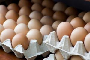 Pałeczki salmonelli na skorupkach jaj