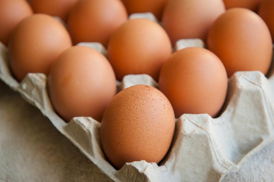 Pałeczki salmonelli na skorupkach jaj sprzedawanych w Netto