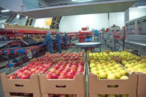 UOKiK ma pilnować cen na rynku owoców