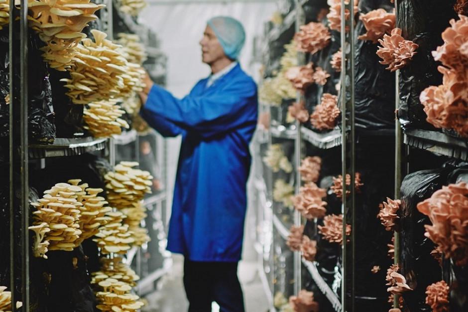 Grzyby napędzają rewolucję żywieniową w Tesco