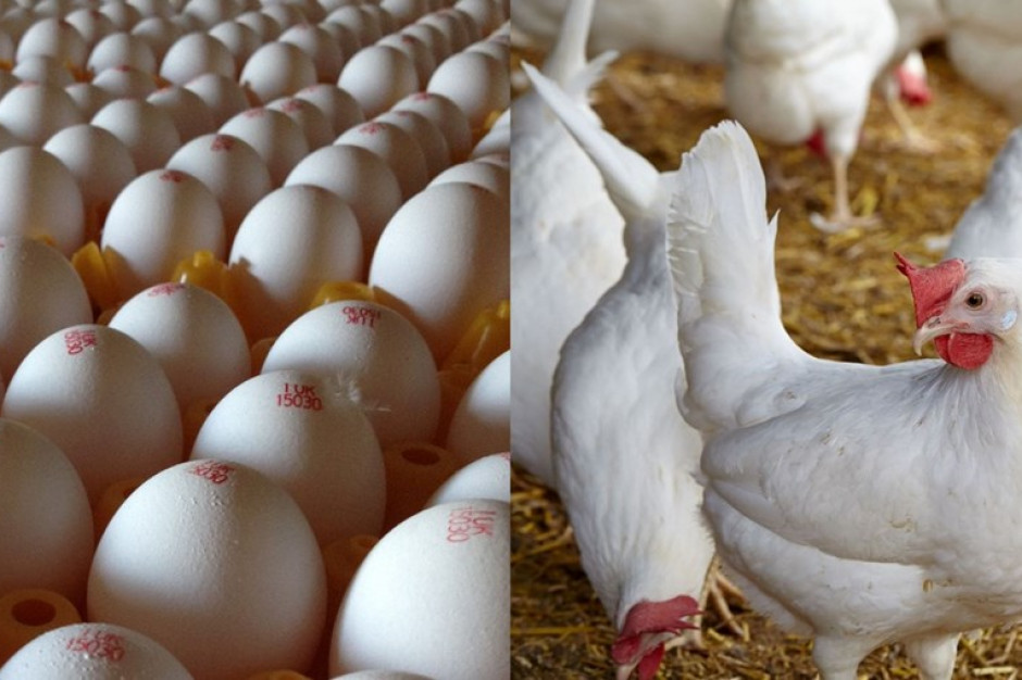 Po ponad 40 latach na półki Tesco wracają białe jaja
