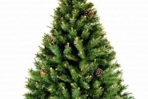 W grudniu Wolt zaoferuje ekspresową dostawę choinek