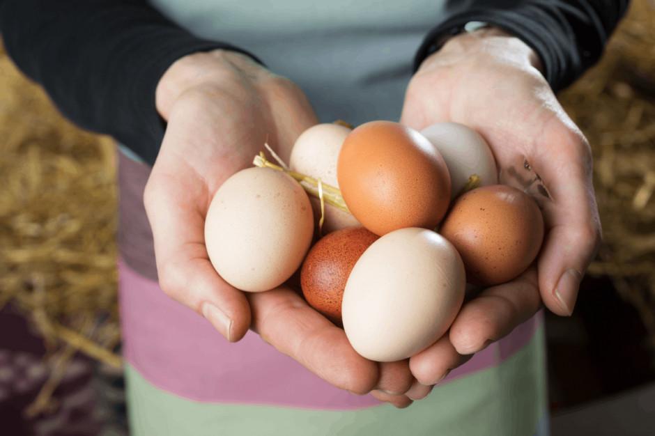 Kaufland: Na początku 2022 roku jaja wyłącznie z alternatywnych form chowu