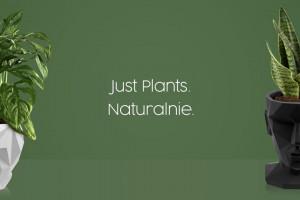 Plantwear będzie sprzedawał rośliny doniczkowe przez internet