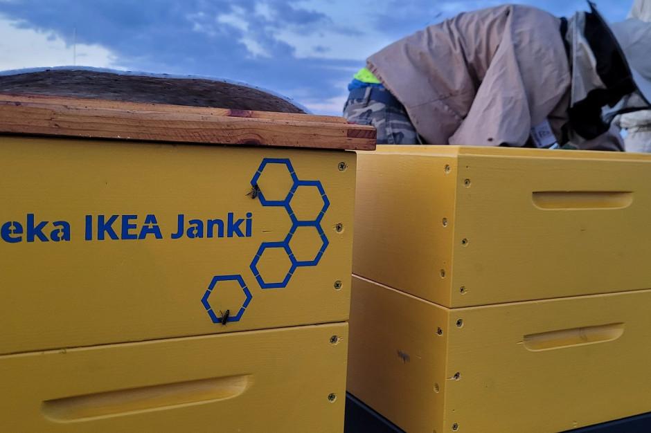 IKEA Janki ma nowych lokatorów – pszczoły!
