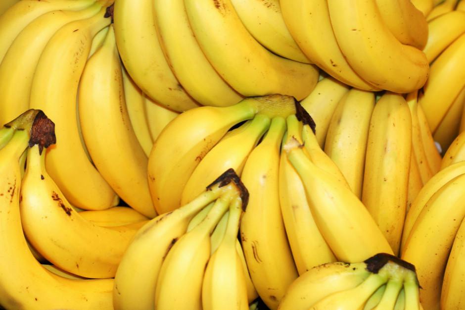 160 kg kokainy w bananach sprzedanych do znanej sieci sklepów w Warszawie