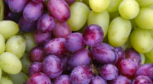 50 tys. zł za kiść winogron wielkości piłeczek pingpongowych