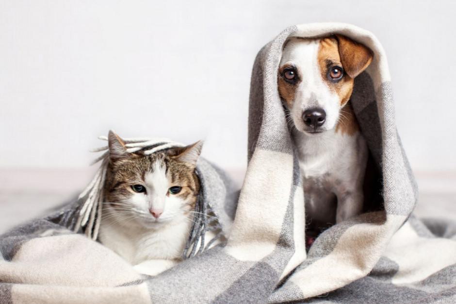 Internetowa sprzedaż artykułów dla zwierząt rośnie o kilkadziesiąt proc. rocznie