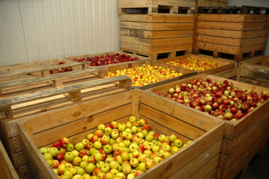 Inspekcja Handlowa sprawdza, czy ceny jabłek są ustalane zgodnie z prawem