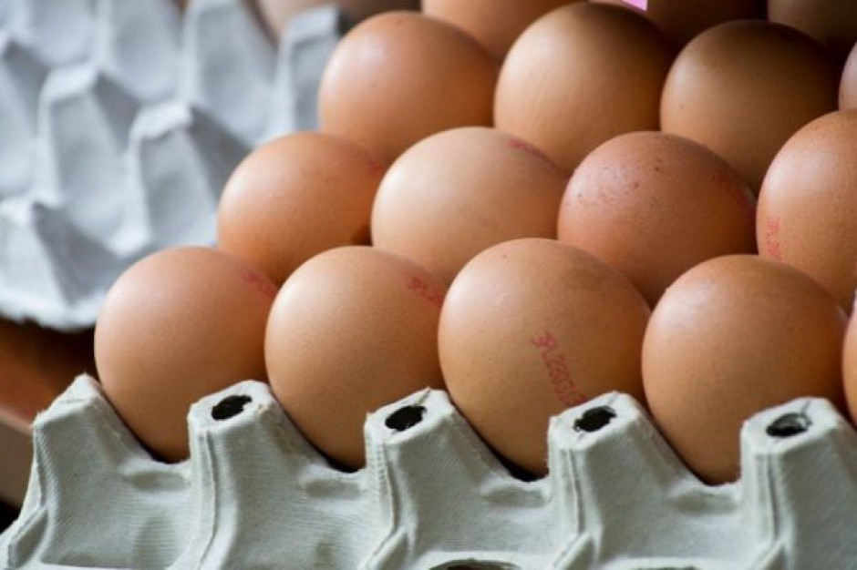 Sanepid ostrzega o salmonelli na skorupkach jajek