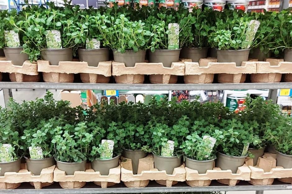 Od 2023 r. wszystkie rośliny w Castorama tylko w doniczkach z recyklingu