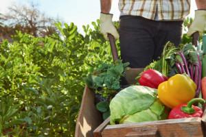 Flagowa strategia Komisji może mieć poważne konsekwencje dla unijnej produkcji żywności, fot. Shutterstock