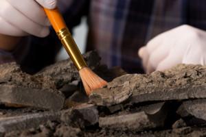 fot, badania archeologiczne, shutterstock