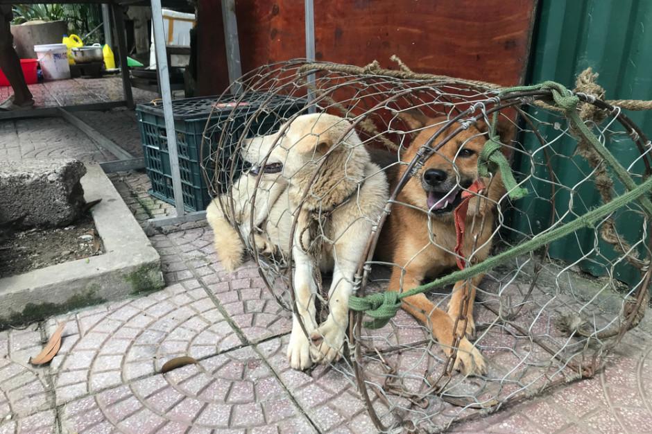 Korea Płd.: Prezydent chce zakazać spożywania psiego mięsa