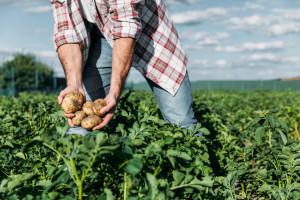 Rosnące koszty produkcji rolnej podważają sensowność jej kontynuowania