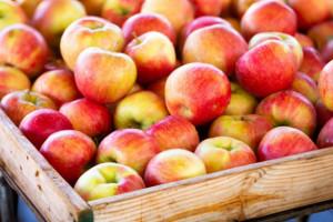 Lewica apeluje do ministra rolnictwa o interwencyjny skup jabłek